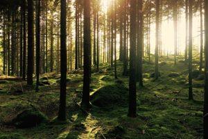 Gästblogg: Det händer något positivt med hjärnan när vi rör oss i skogen